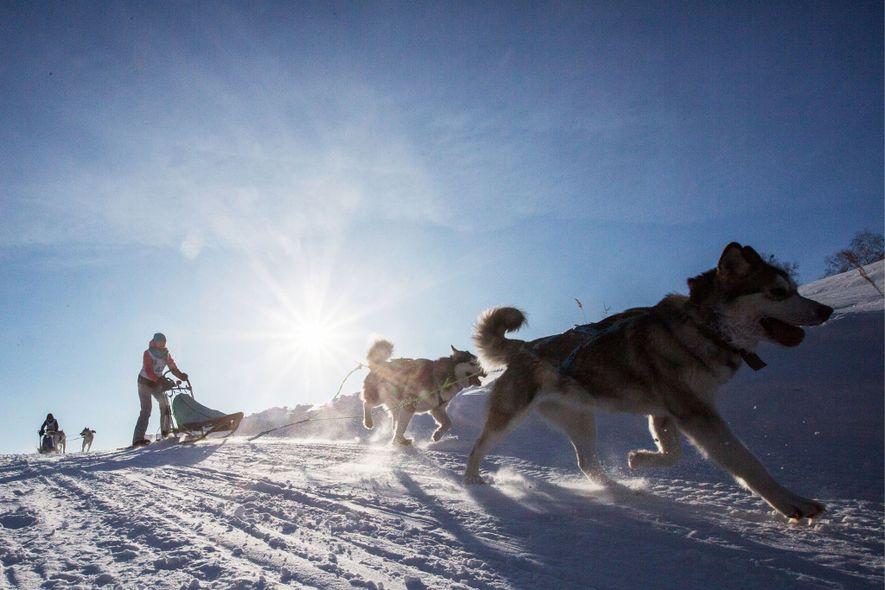 Im Bezirk Krutaya Gorka ziehen Hunde bei einem Rennen einen Schlitten.