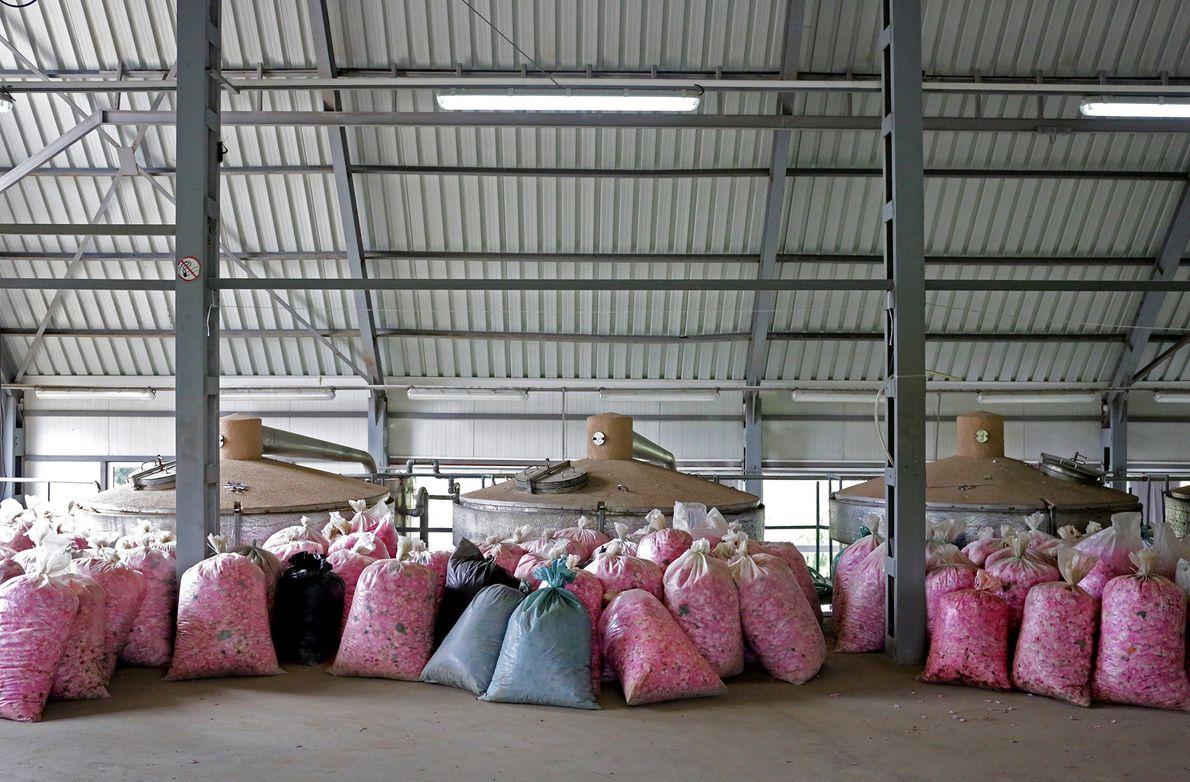 Säcke mit Rosenblüten werden an die Lema-Destillerie in Kazanlak geliefert und sind bereit zur Verarbeitung.