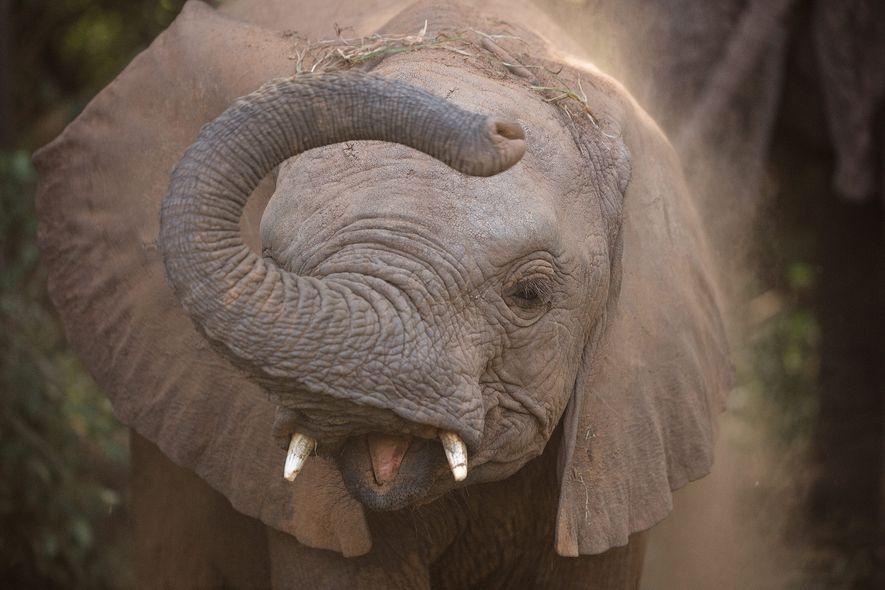 5 Tipps für bessere Safari-Fotos