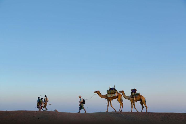 Salopek, der hinter seinen Führern läuft, führt ein Paar Lastenkamele namens A'urta und Suma'atuli durch die ...
