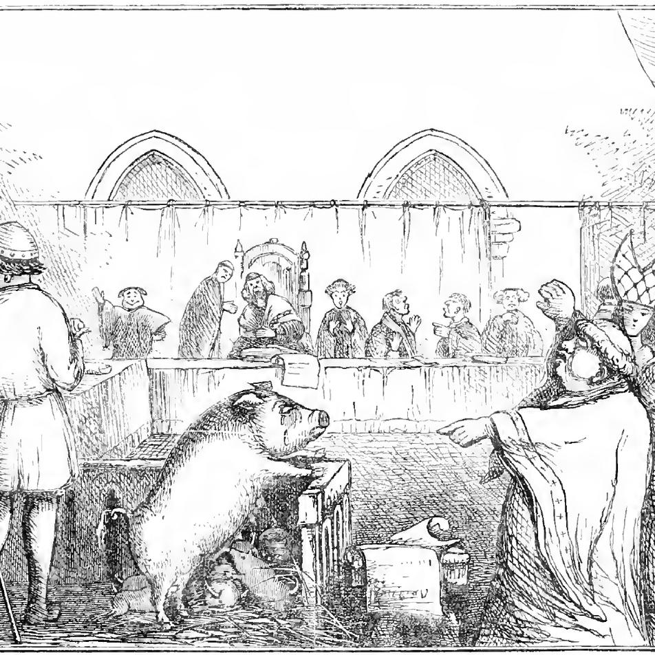 Die Geschichte der Tierprozesse: Von mörderischen Schweinen und teuflischen Holzwürmern