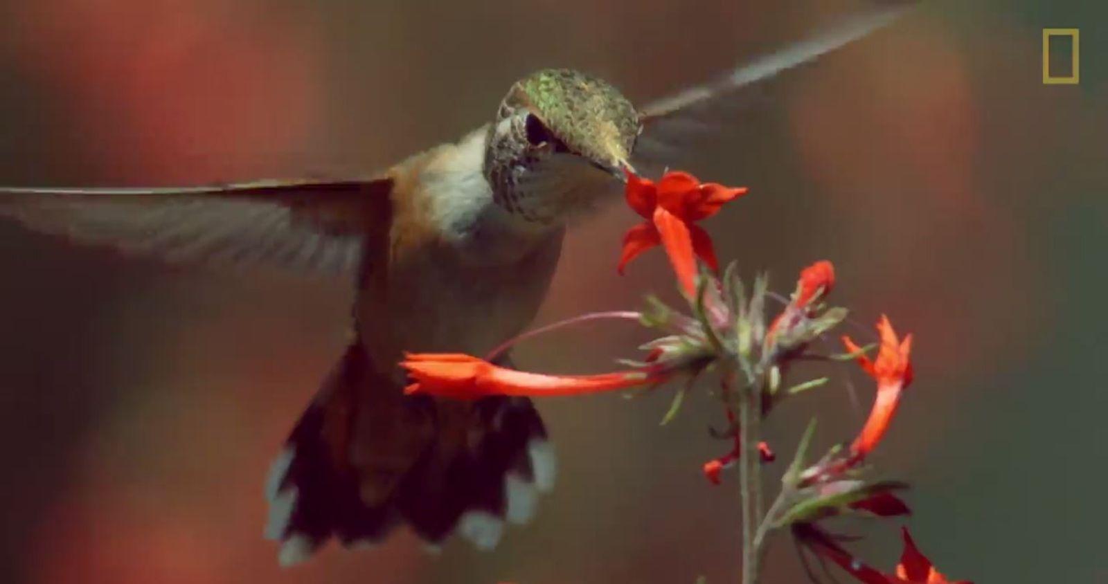 Hinter den Kulissen: So entstehen Zeitrafferaufnahmen von Kolibris
