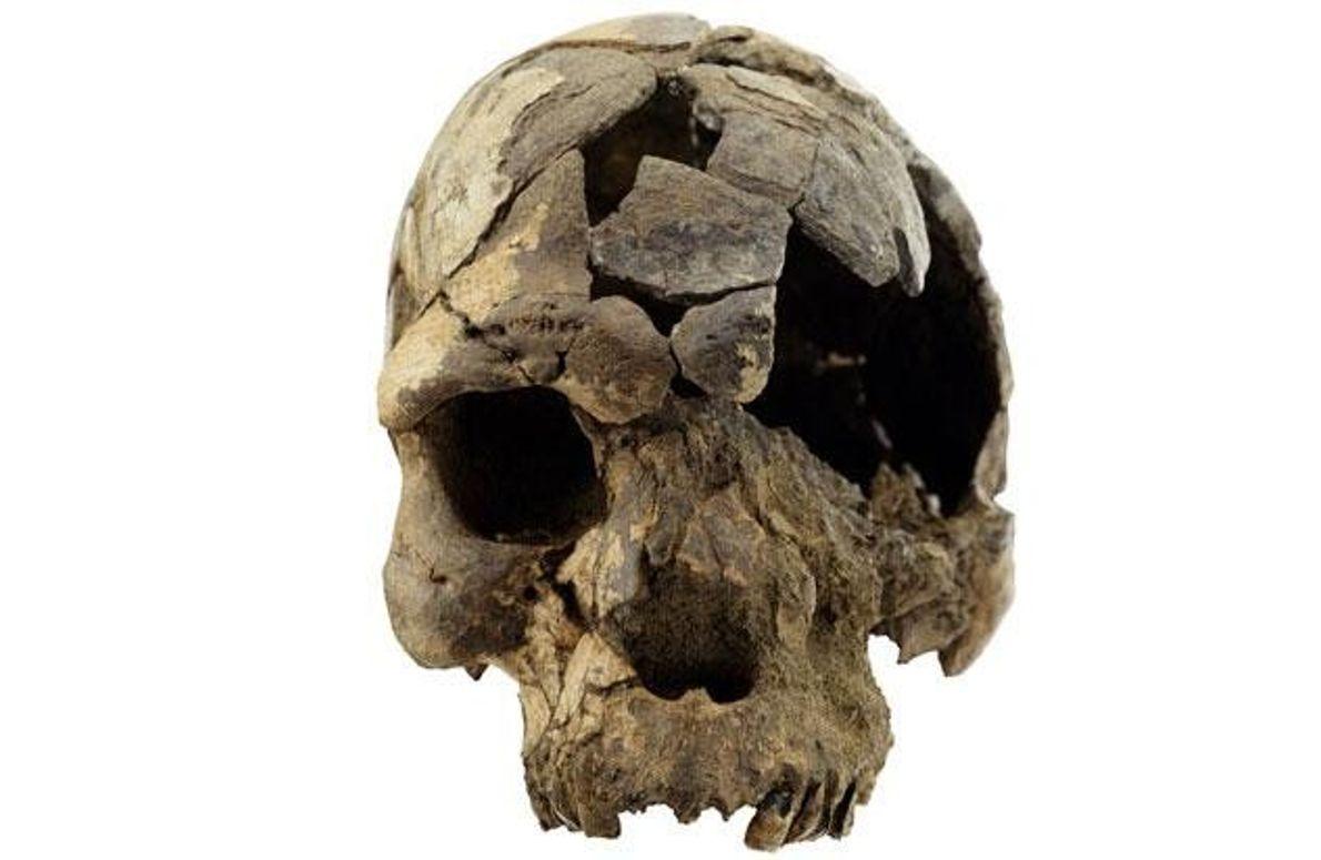 Schädel eines Homo sapiens
