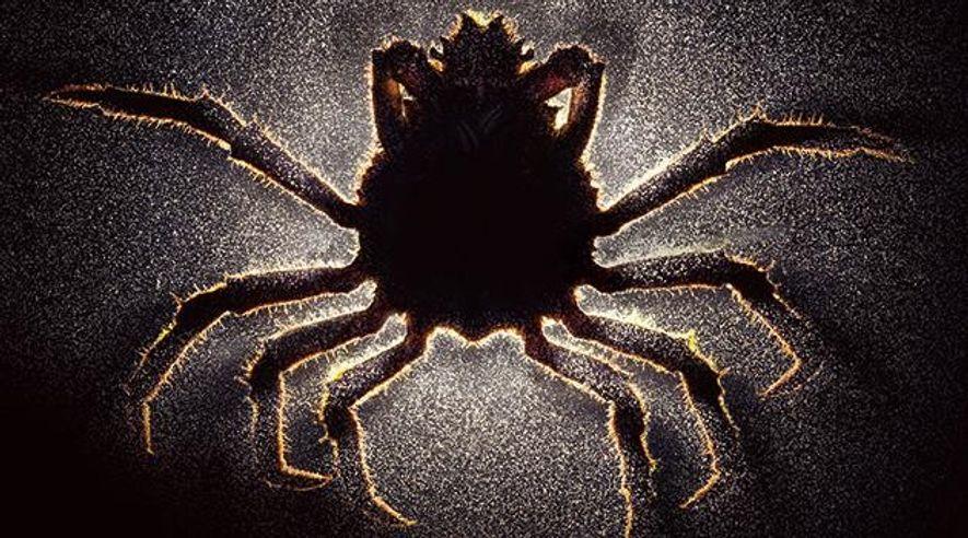 Parasiten – Der Albtraum der Evolution