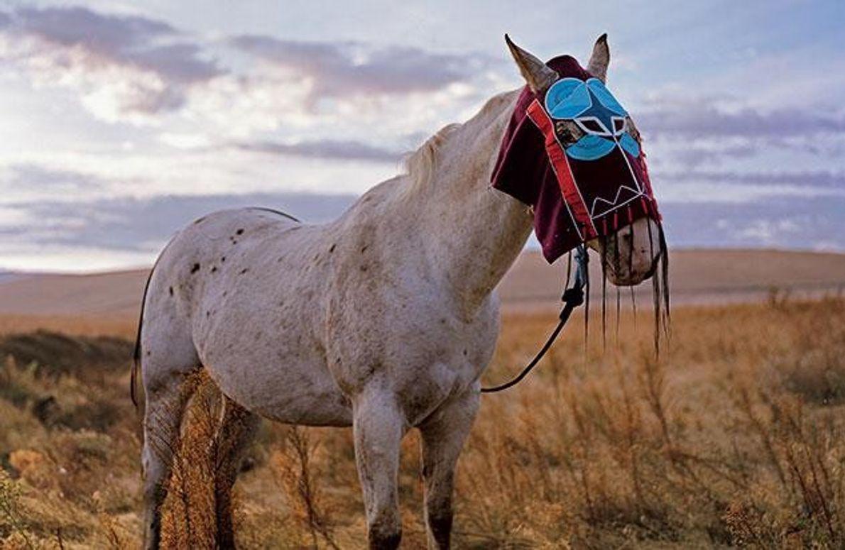 Schmuck für Pferde