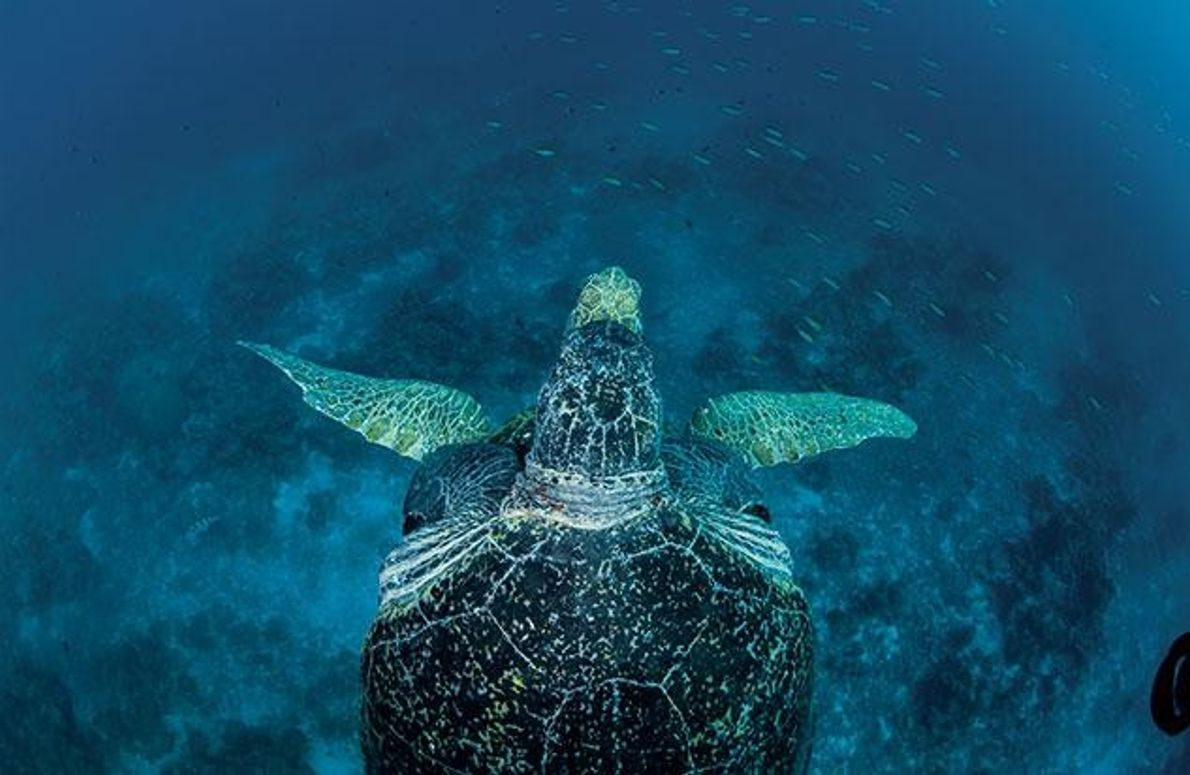 Schutz am Europa-Atoll
