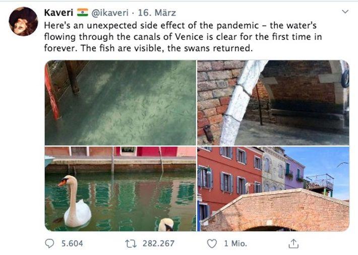 Ein viraler Tweet behauptete, dass Schwäne in die Kanäle von Venedig zurückgekehrt wären. Die Bilder stammen ...