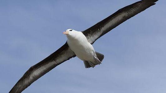Auf den Schwingen des Albatros