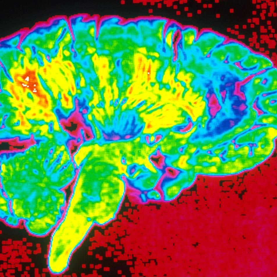 Psychologie: Wieso Menschen Risiken unterschiedlich einschätzen