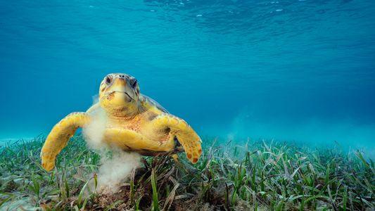 Mobiles Biotop: Schildkröten können über 100.000 winzige Lebewesen auf ihrem Panzer tragen