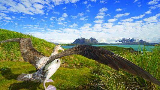 Blick ins Buch: Die Schönheit der Vögel