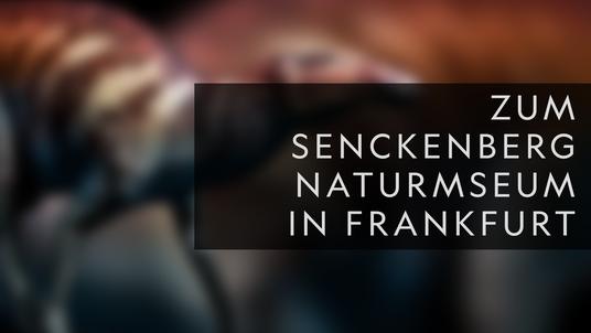 Erfahrt mehr über das Senckenberg Naturmuseum in Frankfurt!