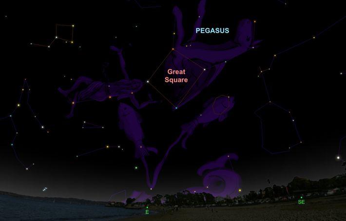 Am 30. September kann man das geflügelte Pferd am östlichen Nachthimmel entdecken.