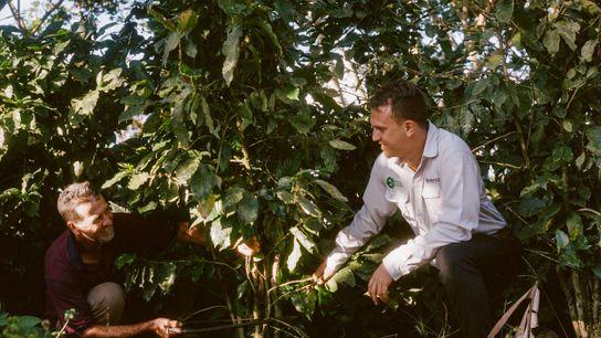 Luis und der Agronom Fernando stutzen gemeinsam einen Kaffeebaum. Die beiden verbindet heute eine enge Beziehung ...