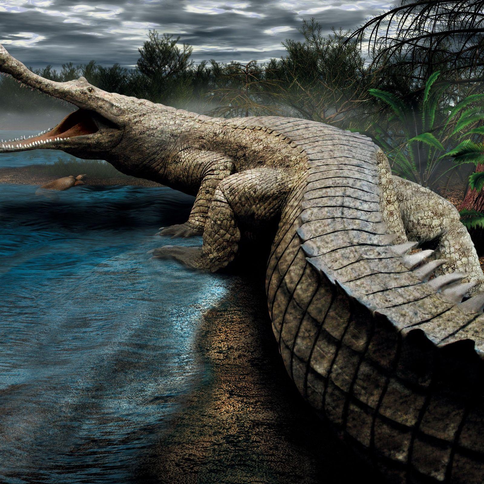 Sarcosuchus imperator – oder SuperCroc, wie es auch genannt wird – war ein kreidezeitliches Krokodil, das ...