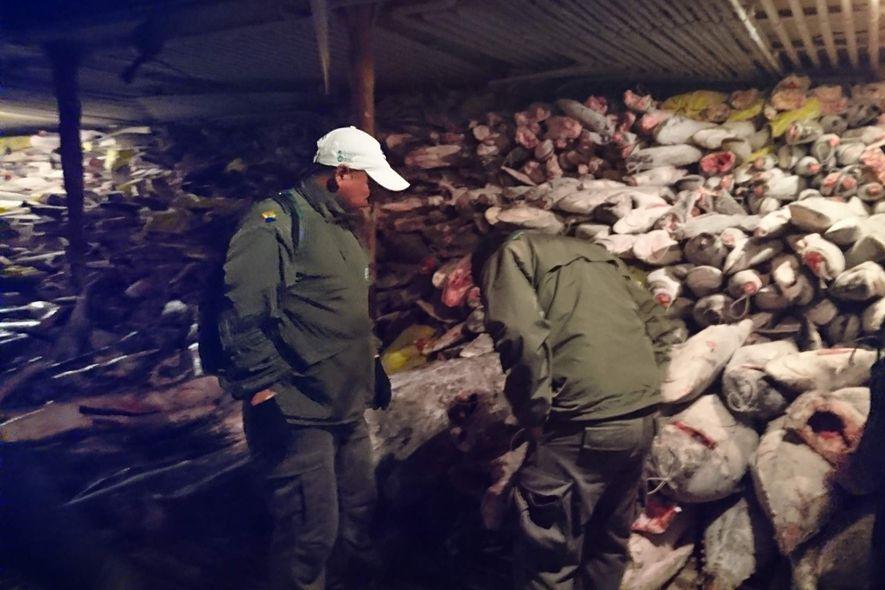 Tausende Haie auf illegalem Fangboot vor Galapagos-Nationalpark gefunden