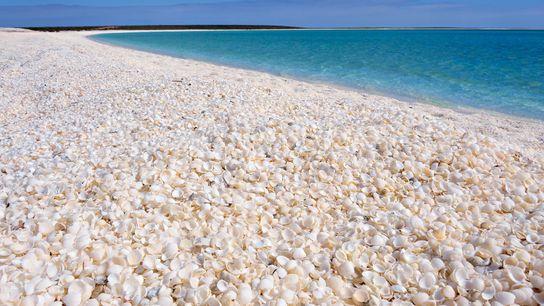 Foto vom Shell Beach in der Shark Bay, Westaustralien