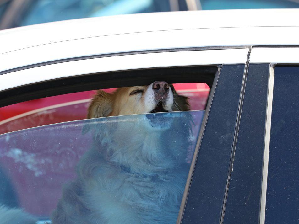 """Hund im heißen Auto: """"Nur mal schnell"""" ist oft zu lang"""