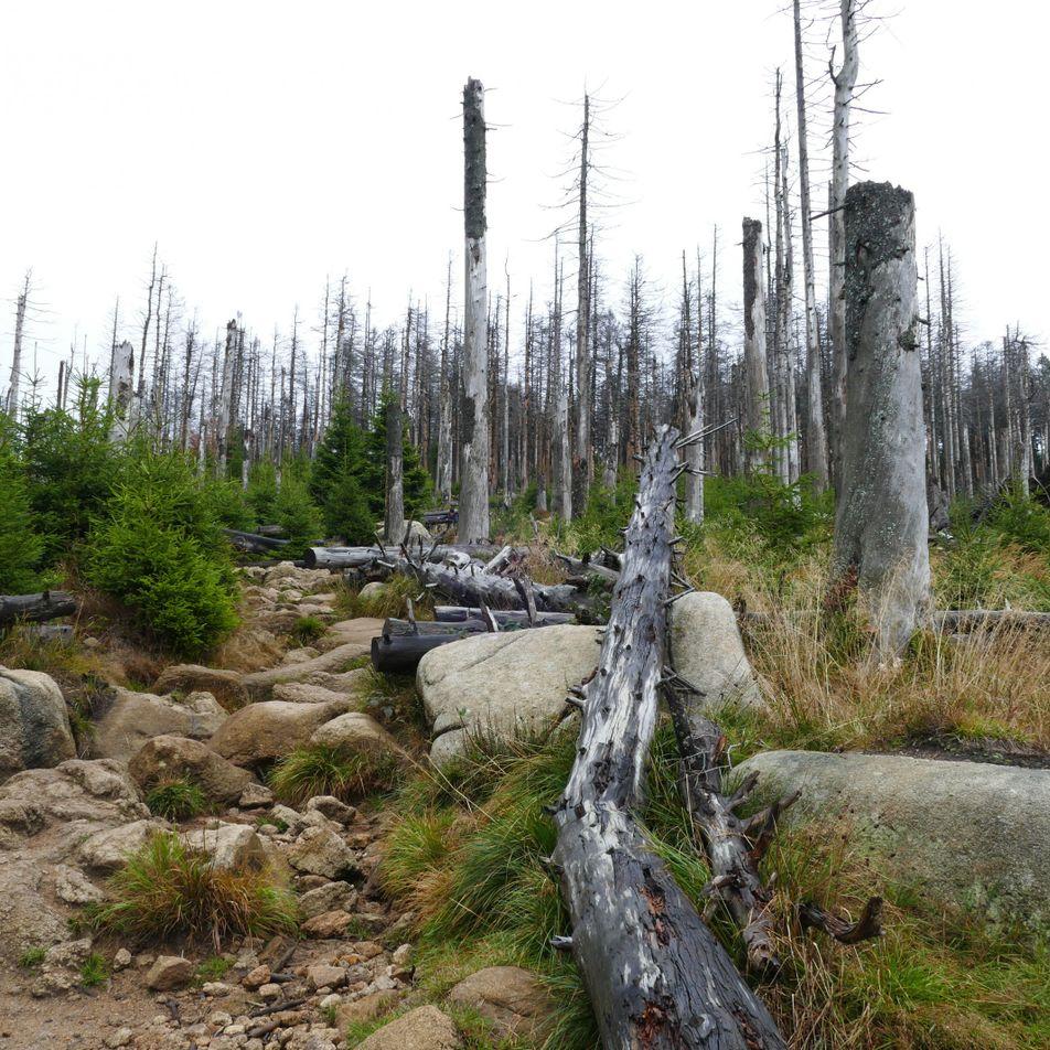 Waldschäden in Deutschland schlimmer als erwartet