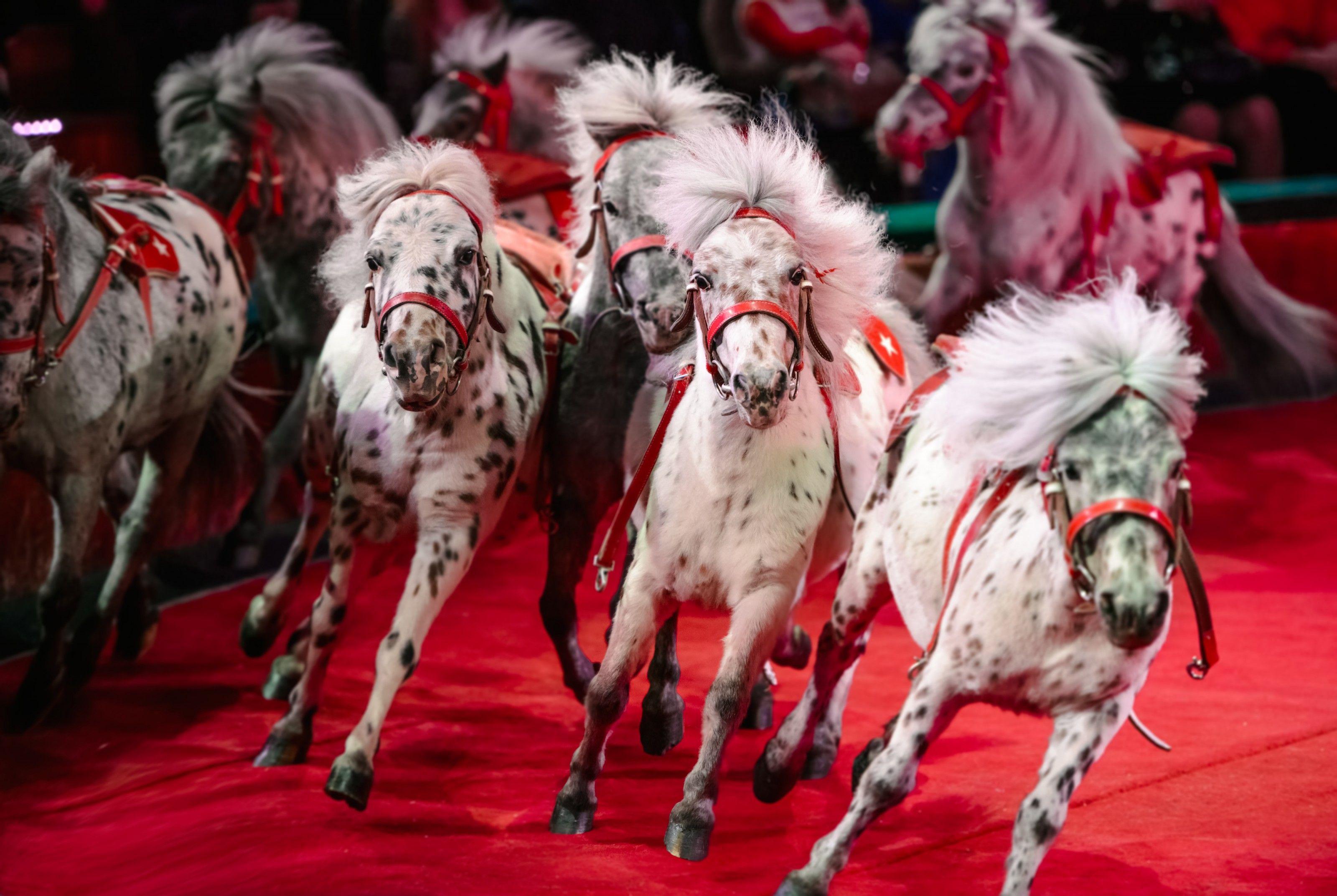 Vom Zirkus in die Freiheit: Warum ausgebrochene Tiere in Panik geraten | National Geographic