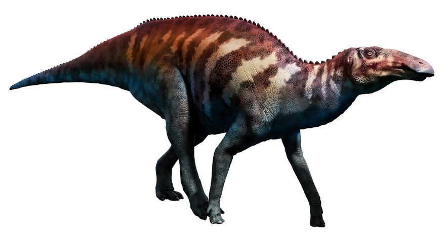 Edmontosaurus-Steckbrief: Das Leben der Mumie Edmond