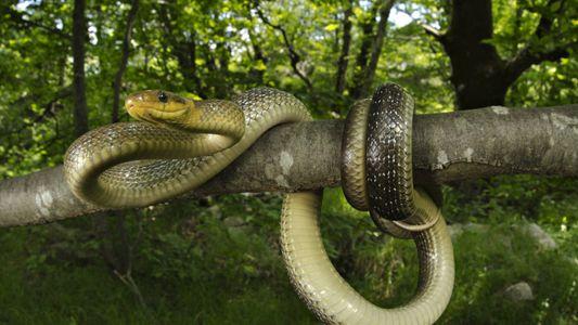 Giftig oder harmlos? Schlangen in Deutschland