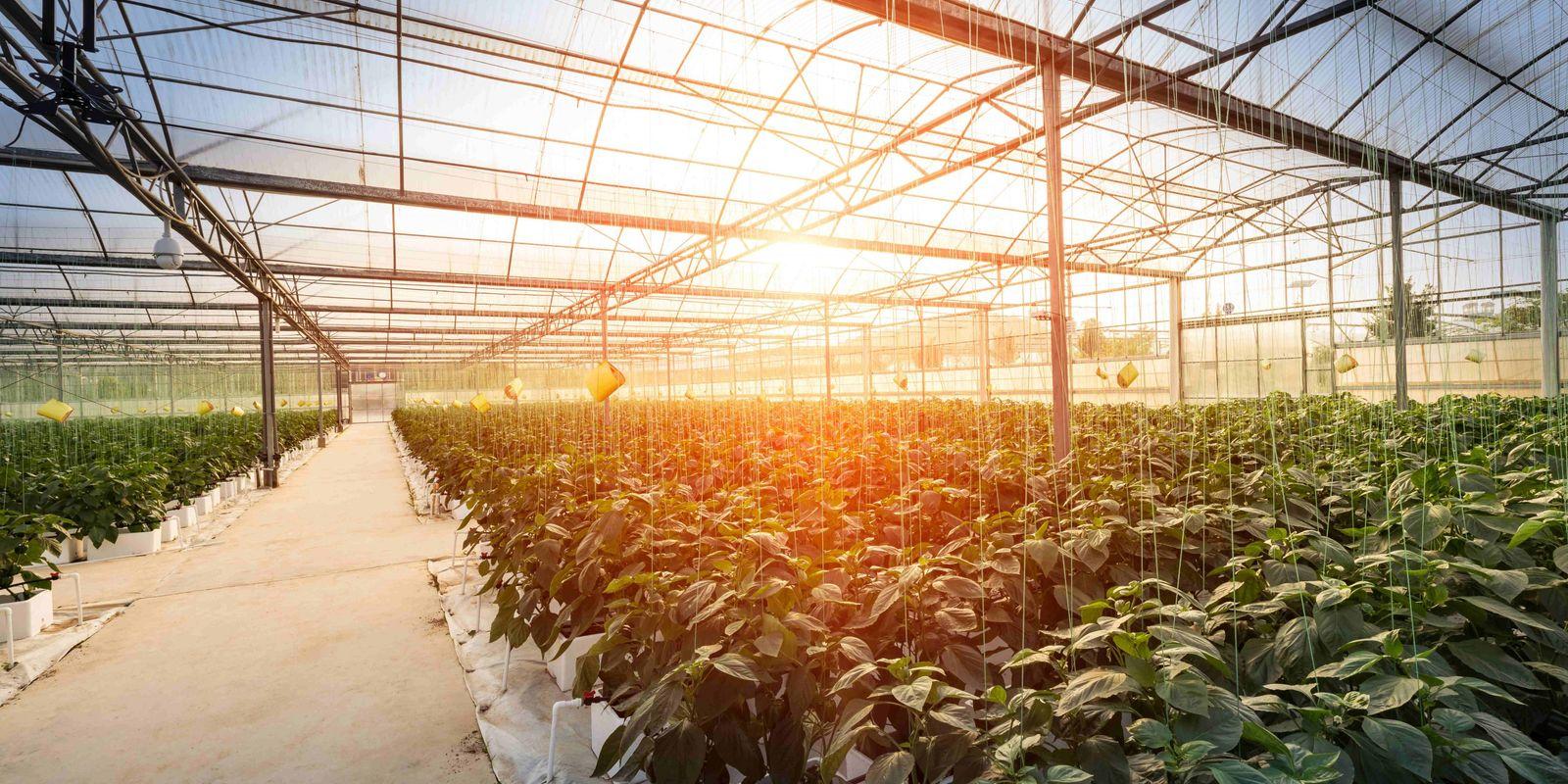 Zukunft des Agrarwesens: Wie werden 10 Mrd. Menschen satt?