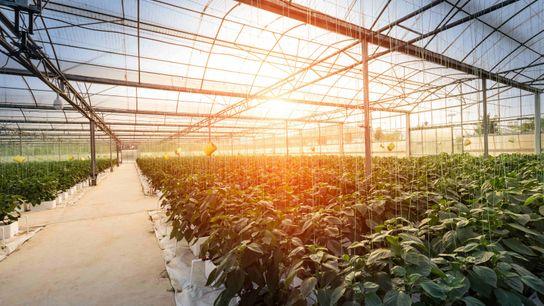 Gewächshäuser helfen dabei, Temperatur, Wasser und die Nährstoffe für die Pflanzen in einem geschlossenen Agrarsystem zu ...