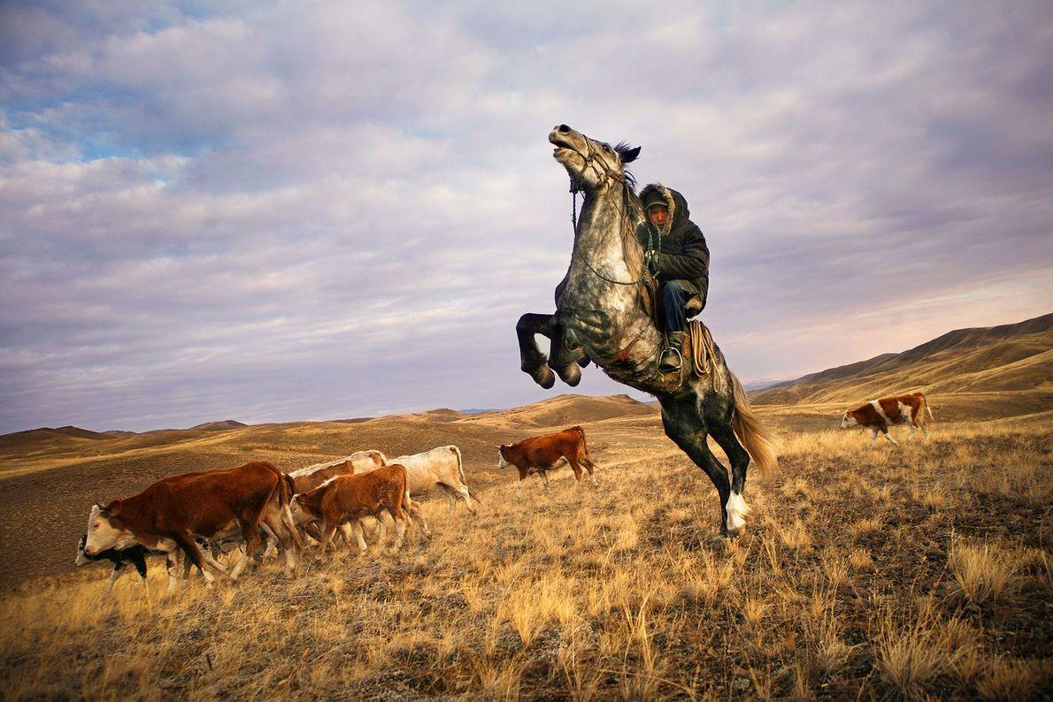 Ein tuwanischer Hirte reitet in der Nähe von Kysyl in Sibirien neben seinem Vieh.