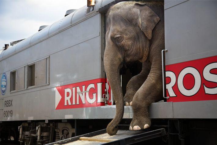 Der Ringling Bros. and Barnum & Bailey Circus hatten seinen letzten Auftritt im Mai 2017. Ihre ...