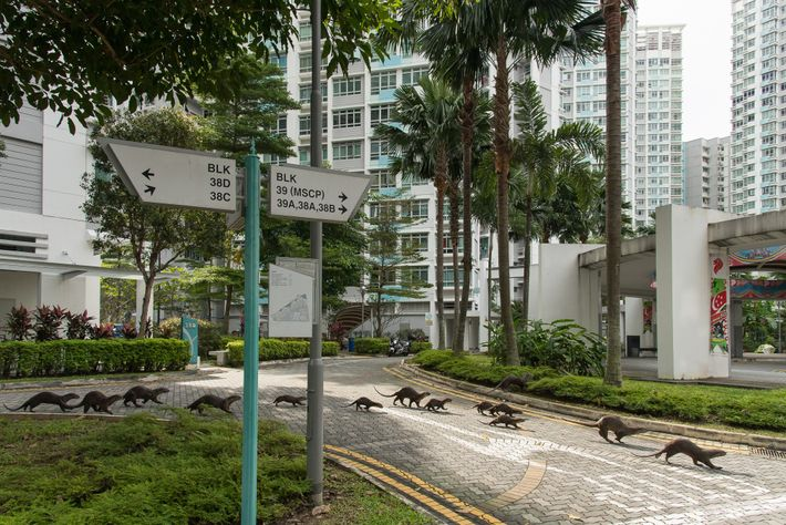 Otter in Singapur: Bishan-Familie