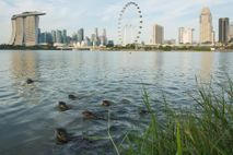 Otter in Singapur