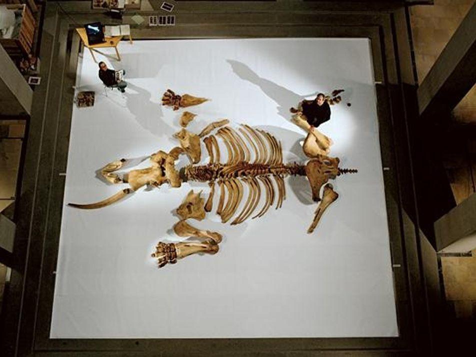Galerie: Deutschlands Ur-Elefanten