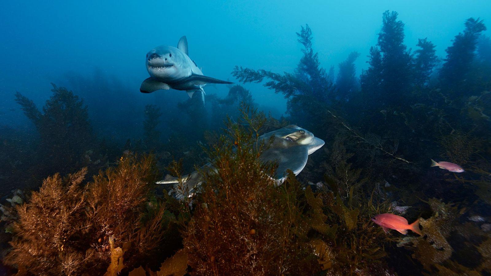 Das saubere Wasser vor den australischen Neptune Islands macht die Region zu einem der besten Orte ...