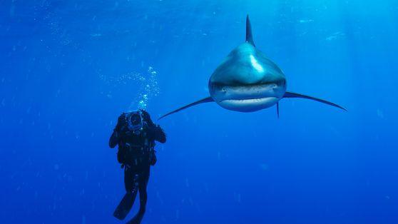 Imagewandel für Haie: Liebeserklärung eines Fotografen