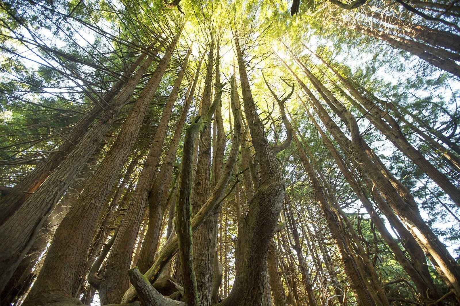 Der Usal Redwood Forest erstreckt sich auf über 20.000 Hektar an der kalifornischen Küste. Die Kombination ...