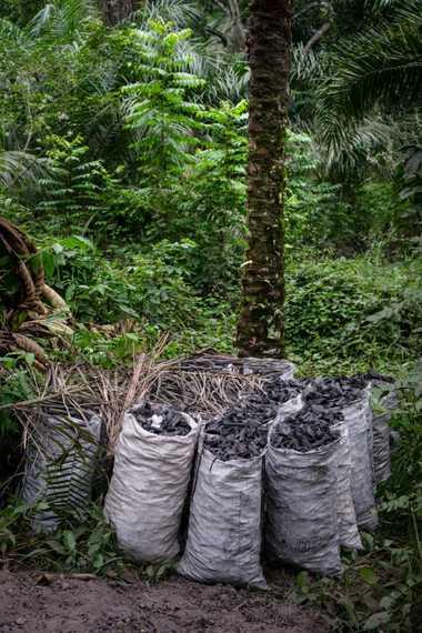Mehrere Säcke voller Holzkohle warten darauf, zum Markt gebracht zu werden.