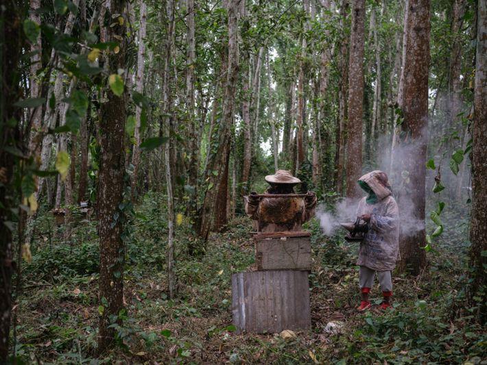 Die Imker Kwebena Bazungula Godfrey und Jean-Jacques Lutete Luakanda sehen nach ihren Bienenstöcken im Luki-Biosphärenreservat.