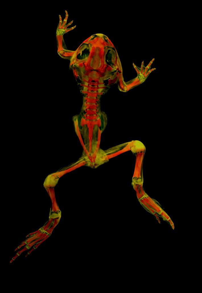 vertebrate-skeletons-8