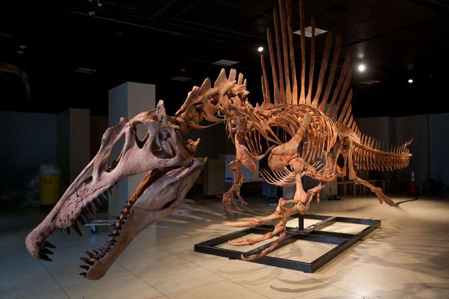 Größter fleischfressender Dino jagte im Wasser, schwamm aber schlecht