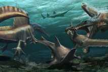 Zwei Spinosaurus aegyptiacus machen Jagd auf prähistorische Onchopristis-Sägefische. Vor 97 Millionen Jahren bedeckte ihr heimisches Flusssystems ...
