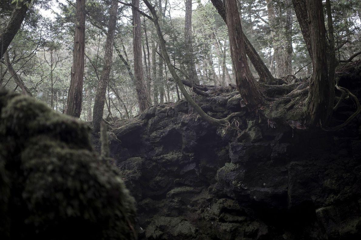 Aokigahara Forest, Japan