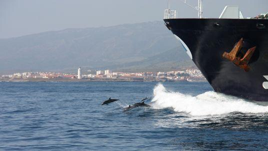 Gefährliches Paradies: Wale und Delfine in der Straße von Gibraltar