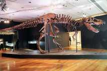 Stan, Tyrannosaurus rex