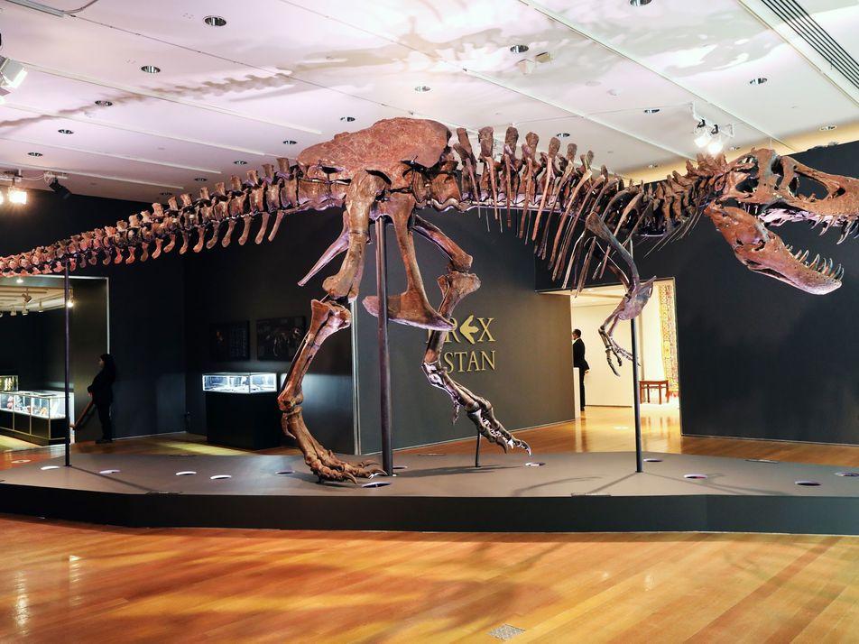 Katastrophe für die Wissenschaft: T. rex für Rekordsumme versteigert
