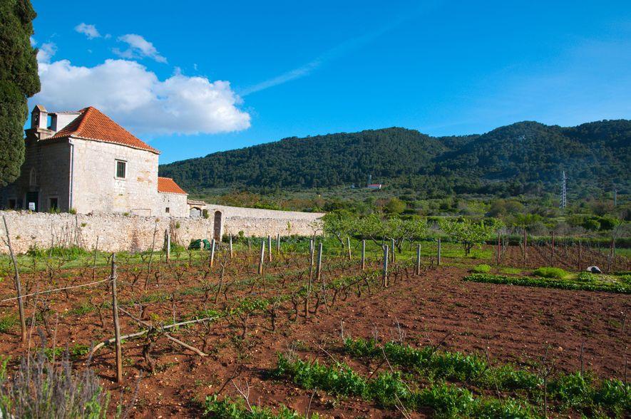 Das Landwirtschaftssystem auf der Ebene von Stari Grad basiert auf geometrischen Parzellen mit Bruchsteinmauern und hat ...