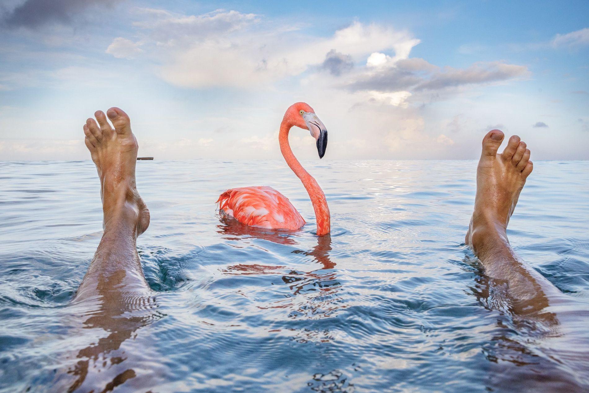 Flamingo als Umweltaktivist