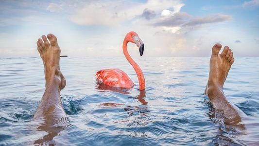Ungewöhnlicher Umweltschützer: Bob, der Flamingo