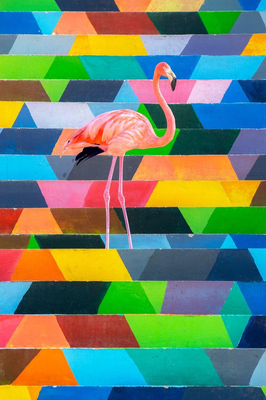 Flamingo vor bunten Stufen