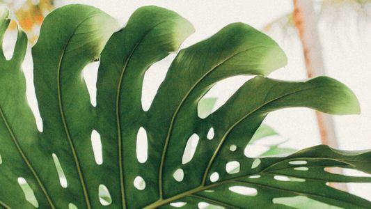 Grüne Sünde: Wie nachhaltig sind Zimmerpflanzen?